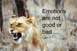 Lioness and Emotions